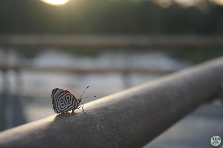 Pareciera que hubo una gran explosión líquida en Iguazú, pero nadie le avisó a las mariposas...