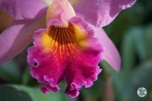 Orquídeas del Jardín Botánico de Rio 1