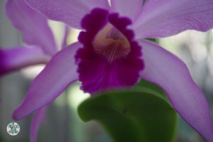 Orquídeas del Jardín Botánico de Rio 4