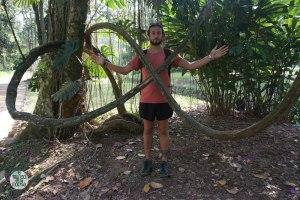 Peter elmundoenlamochila con liana enredada en Jardin Botánico de Rio