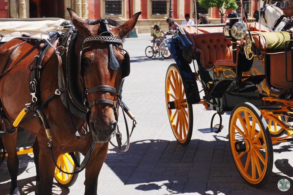 Caballos con carretas en Sevilla
