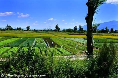 Campos de cultivo en los alredores de Dali