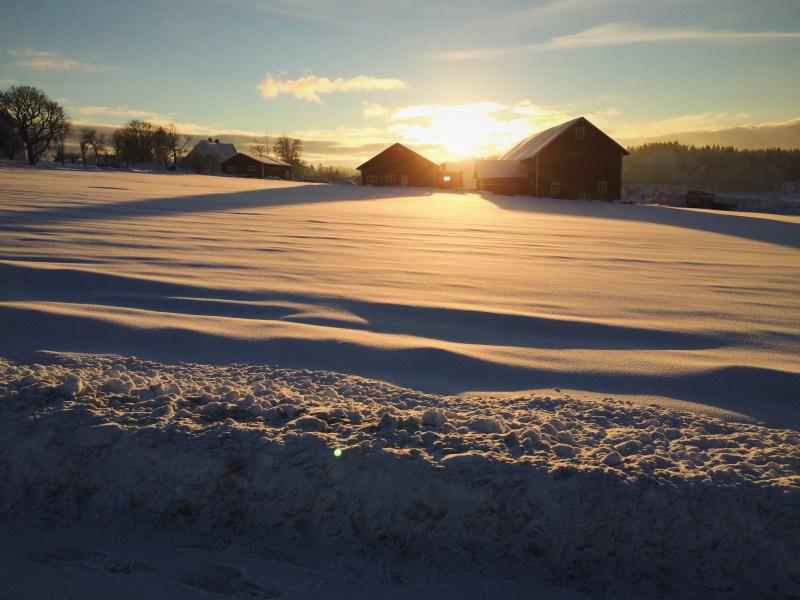 Early golden hour in Sweden