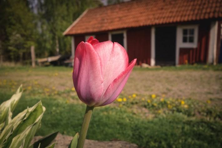 Kvarnskogen_alboga_forsommar-16