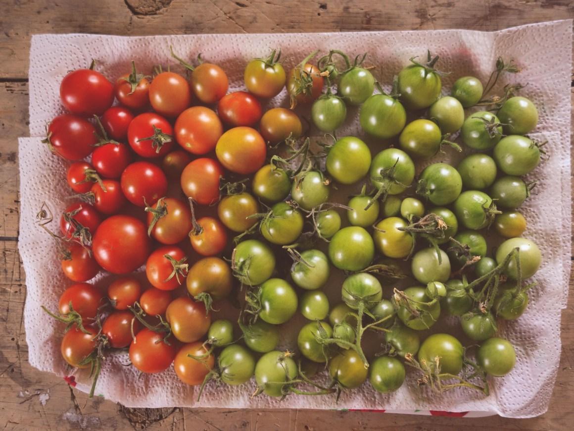 Hemodlade tomater