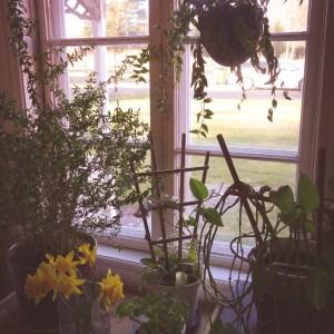 Mormors vackra växter