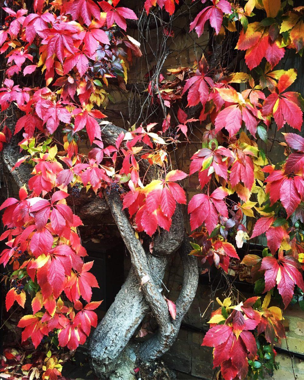autumn16_3