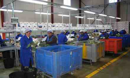 Una nueva empresa en el Polígono Industrial del Agua Salada da trabajo a más de 30 personas