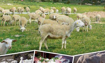 Una feria promociona en Caravaca el cordero segureño y los productos de la Región con Denominación de Origen