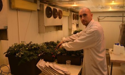 Jóvenes investigadores para transformar la agricultura murciana