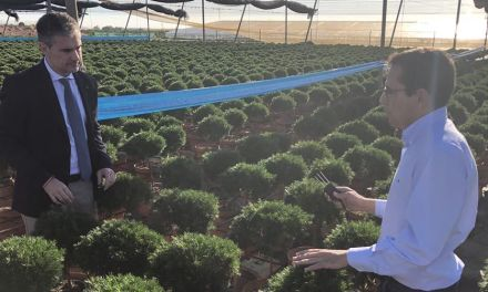 El cultivo de flor cortada aumenta en la Región en el último año y ya se producen más de 250 millones de unidades