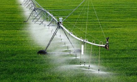 El PP pide controlar las empresas agrícolas que esquilman los recursos hídricos, dañan carreteras y no generan riqueza en el municipio de Caravaca