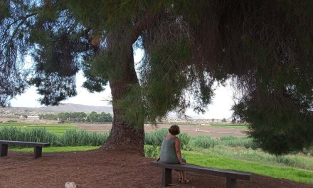 El pino del poyo