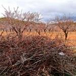 El Ayuntamiento de Cehegín habilitará un punto junto al Ecoparque para que los agricultores puedan llevar sus podas agrícolas