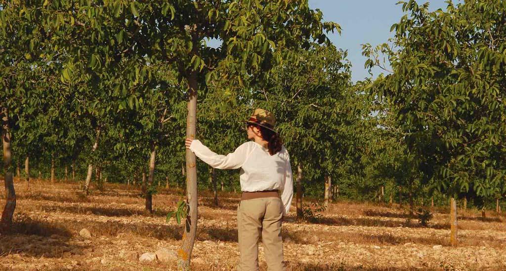 """Nueces Ecológicas """"Nueca"""" apuesta por la innovación y mejora de su gestión"""
