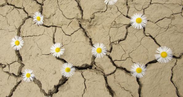 flores en desierto