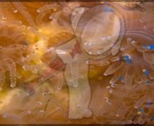 Corales que comen plástico en lugar de alimento