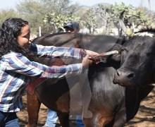 Realizan acciones de identificación de ganado en Escobedo
