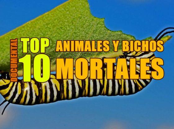 DOCUMENTALES TOP 10 ANIMALES Y BICHOS MORTALES ONLINE EN ESPAÑOL