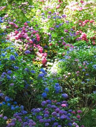 botanic Garden de Wellington