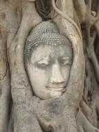 tête de buddha cachée dans un banian