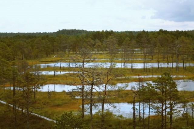 nature estonie