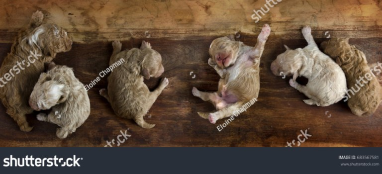Roly Poly Pano of Puppies and More