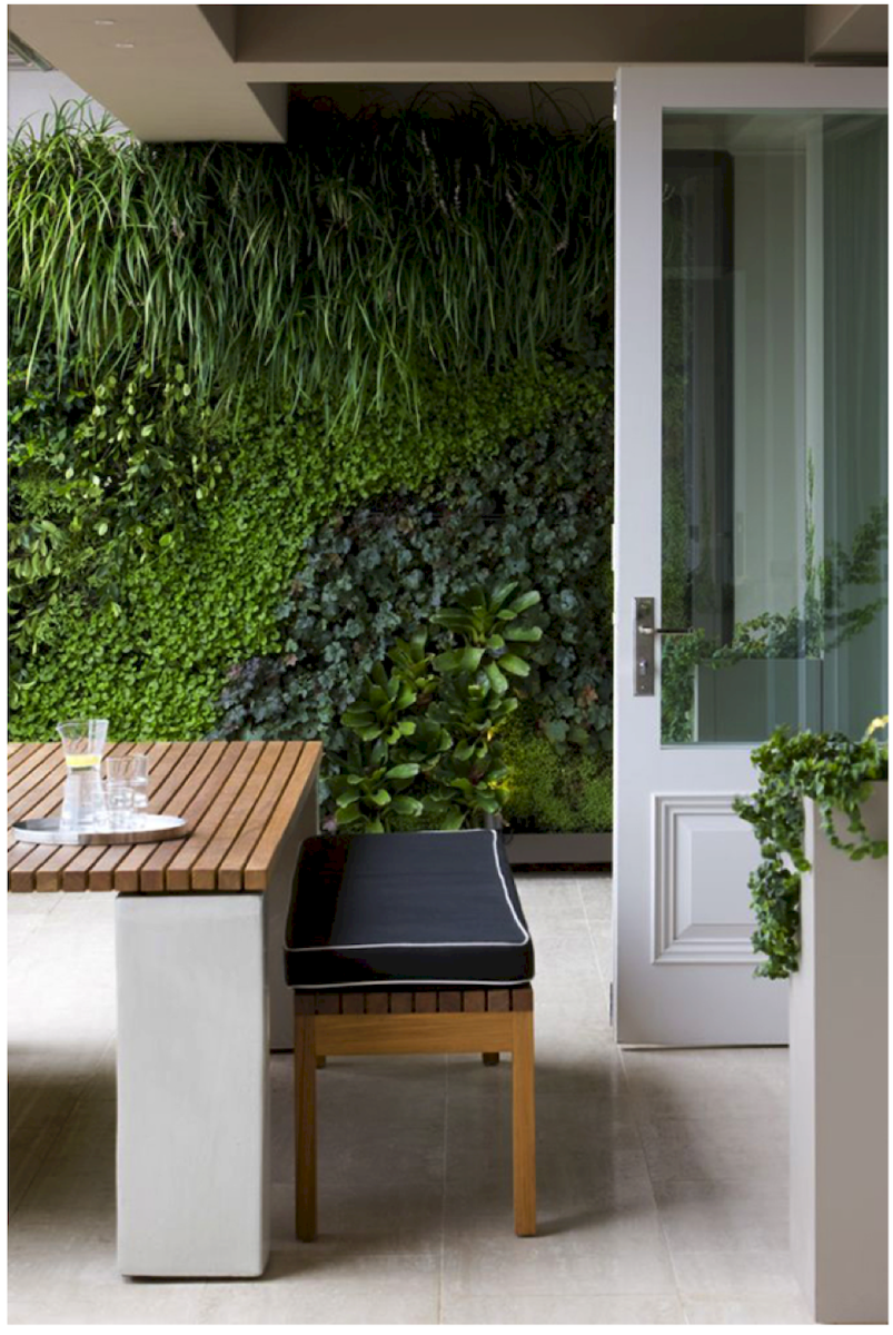 Best Indoor Plants for Tropical Home Decoration Part 2