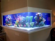 Exotic Wall Mounted Aquarium Giving Better Mood Everyday Part 34
