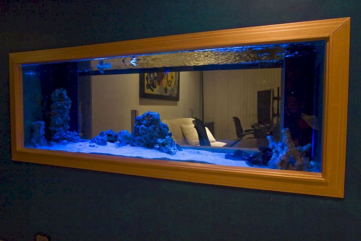 Exotic Wall Mounted Aquarium Giving Better Mood Everyday Part 40