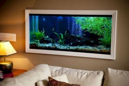 Exotic Wall Mounted Aquarium Giving Better Mood Everyday Part 51