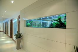 Exotic Wall Mounted Aquarium Giving Better Mood Everyday Part 53