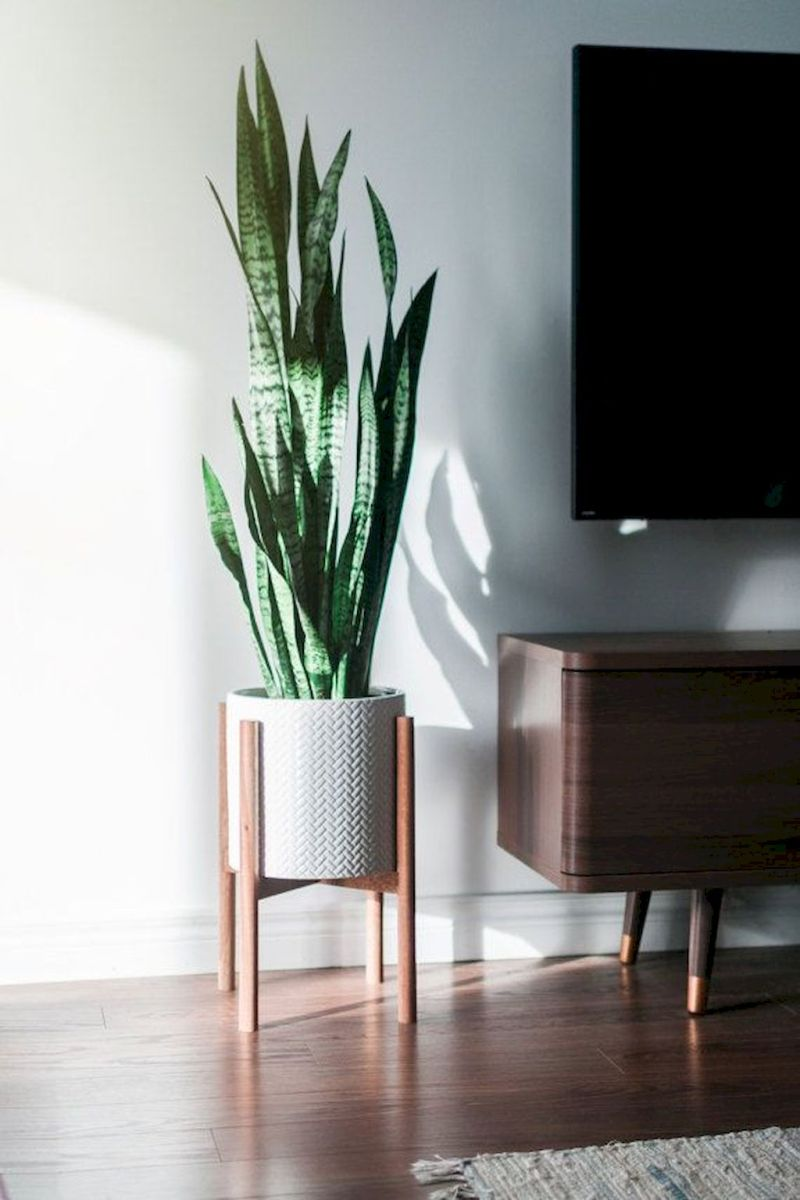 Lively Living Room Vibe with Indoor Plant Decoration Part 38