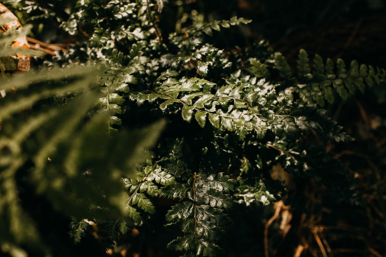 unfurl3-photography-woodland-elopement-wedding-inspiration-outdoor-enchanted-forest-intimate-ceremony-elope-boho-floral-fern