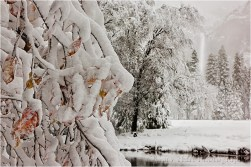 Fall in to Winter, Yosemite