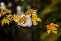 Gary Hart Photography, Autumn Light, Yosemite