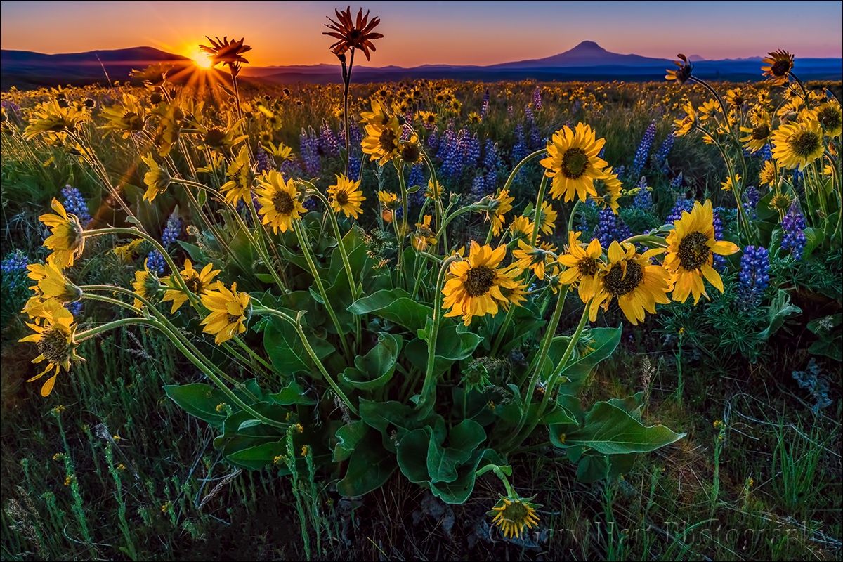 Depth of field | Eloquent Nature by Gary Hart