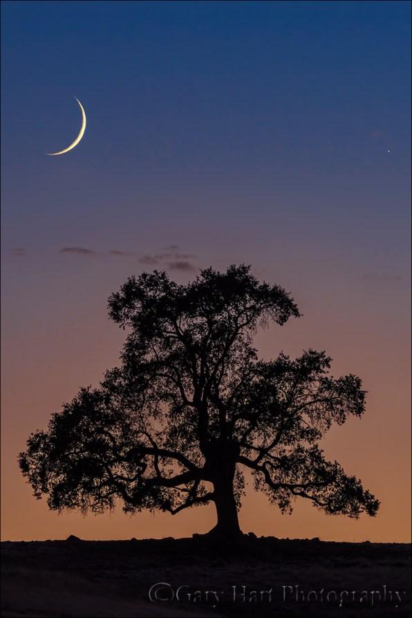 New Moon, Sierra Foothills, California