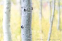 Gary Hart Photography: Aspen Abstract, Lundy Canyon, Eastern Sierra