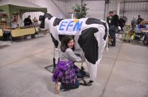 Our Cow 3