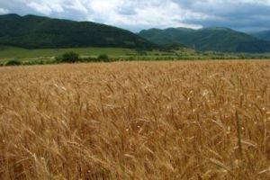 El reto del cambio climático para la agricultura rusa