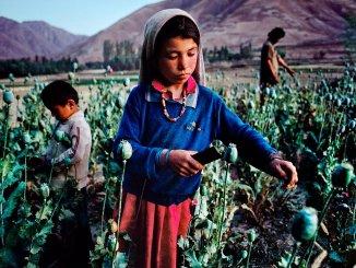Una niña afgana recoge opio en la provincia de Badajshán (1992). Fuente: Steve McCurry (The Guardian)
