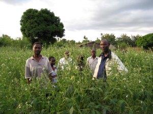 ¿Integración étnica o competición cultural? El motor democrático en Zambia y Malaui