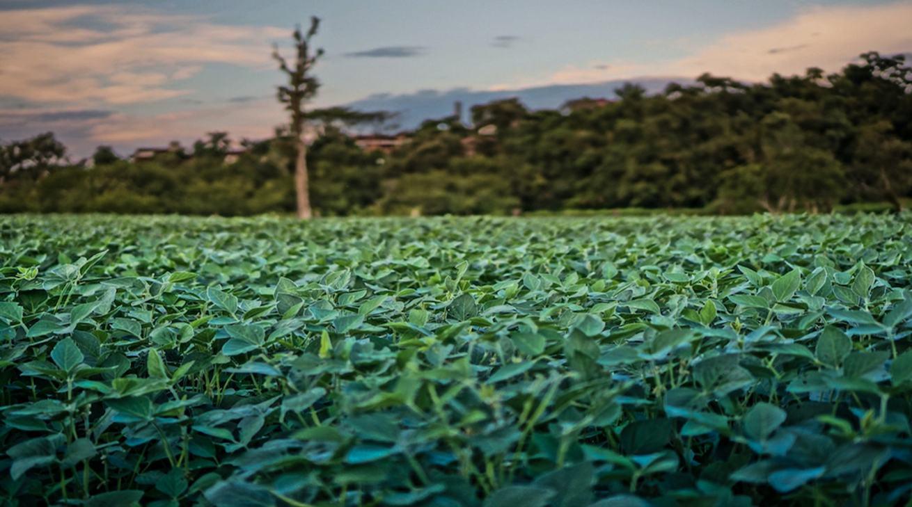 La clase media china y la deforestación del Amazonas