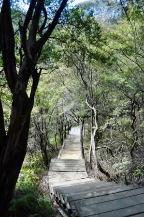 Charles Darwin Walk, Blue Mountains, Australia