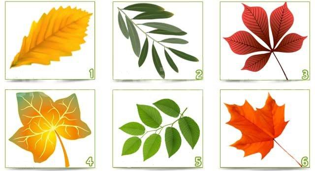 Il test delle foglie: scopri la tua personalità