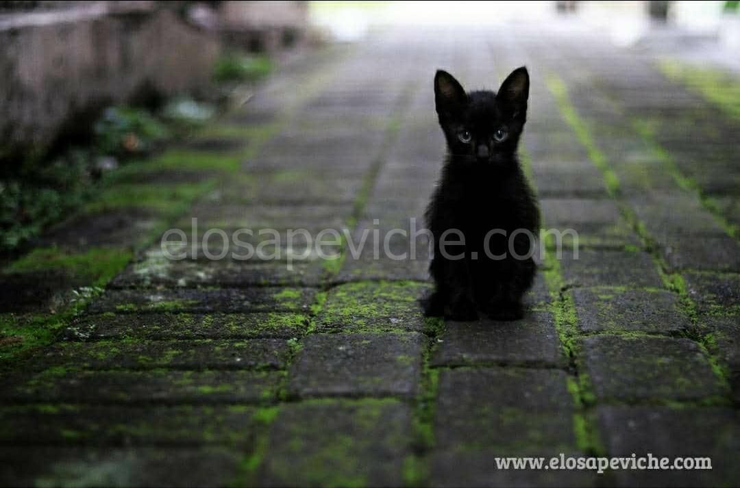 L'antico significato simbolico dei gatti neri e perché la gente li teme