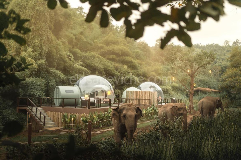 """In Thailandia, puoi dormire vicino agli elefanti selvaggi nella """"bolla della giungla"""" sotto le stelle"""