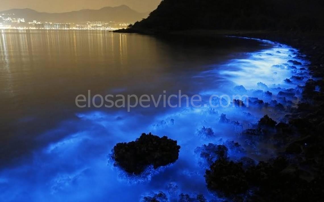Bioluminescenza: un evento inaspettato sulle spiagge di Acapulco