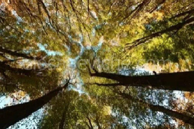 Un albero per ogni persona morta di Covid, a Firenze nasce un bosco dedicato